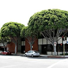 The Crestmont Building, where my office is located